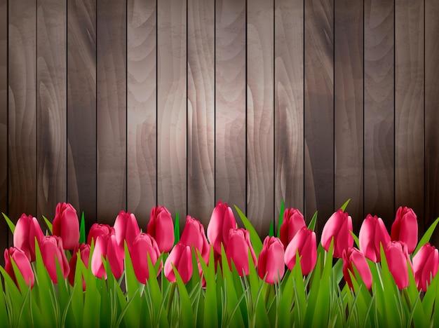 Fond de printemps nature avec des tulipes rouges sur panneau en bois.