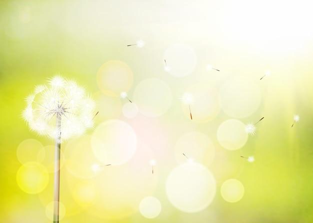 Fond de printemps avec pissenlit blanc.
