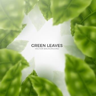Fond réaliste de feuilles vertes