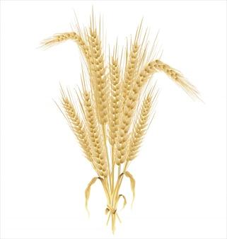 Fond rétro de blé