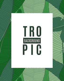 Fond de silhouette tropicale magnifique feuille de palmier