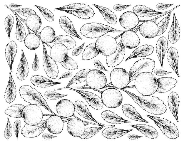 Fond skecth dessiné à la main des fruits cerasus tianschanica