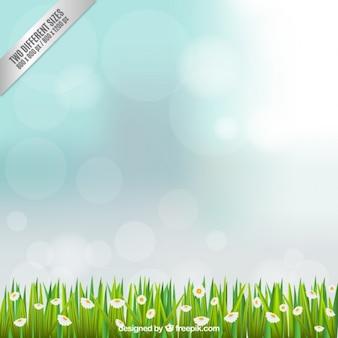 Fond sur le terrain avec des fleurs de camomille