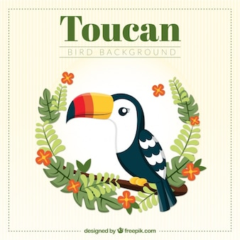 Fond toucan