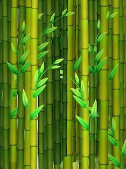 Fond transparent avec du bambou vert