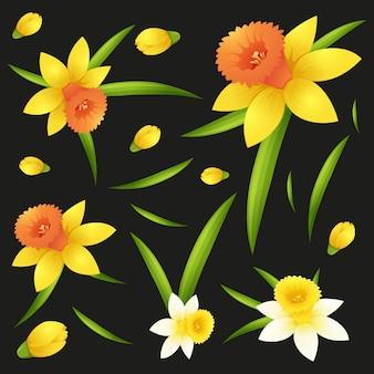 Fond transparent avec des fleurs de jonquille