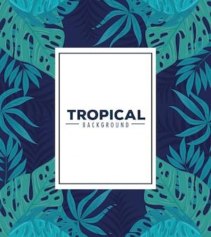 Fond tropical, avec cadre et feuilles de plantes