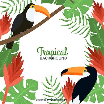 Fond tropical avec des toucans et des plantes
