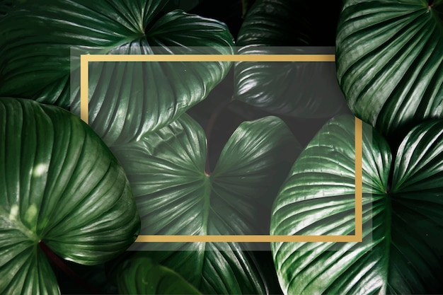 Fond tropical vert
