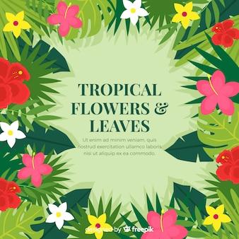 Fond tropical