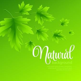Fond de vecteur naturel avec des feuilles de printemps vertes