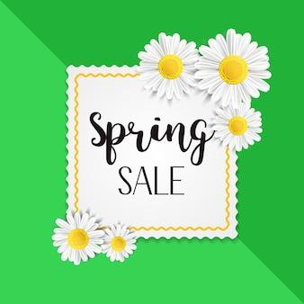 Fond de vente de printemps avec de belles fleurs de camomille blanche