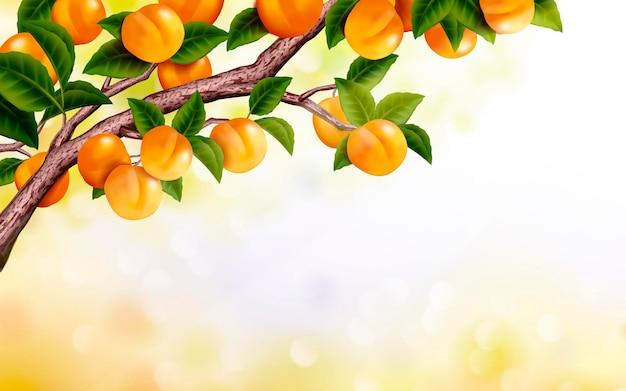 Fond de verger d'abricots, arbre frais et attrayant isolé