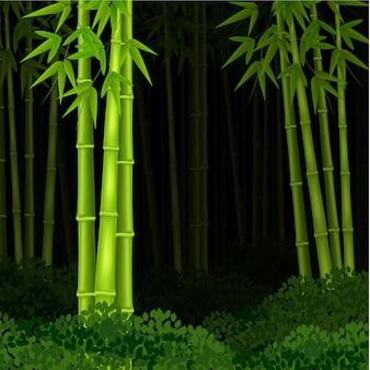 Forêt de bambous de fond la nuit