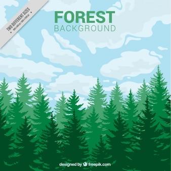 Une forêt fond vert