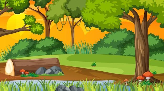 Forêt naturelle au coucher du soleil scène