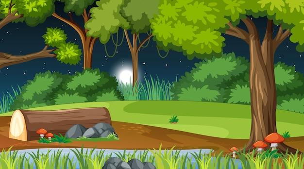 Forêt naturelle la nuit avec de nombreux arbres