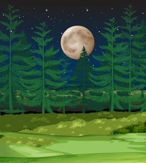 Une forêt la nuit