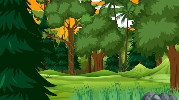 Forêt tropicale ou forêt tropicale au coucher du soleil scène
