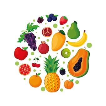 Forme de cercle de fruits