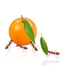 Les fourmis se déplacent en orange
