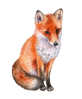 Fox isolé. aquarelle