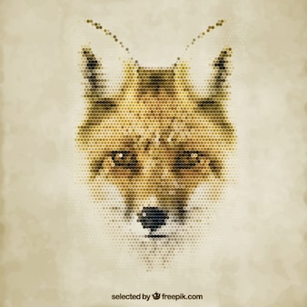 Fox polygonale