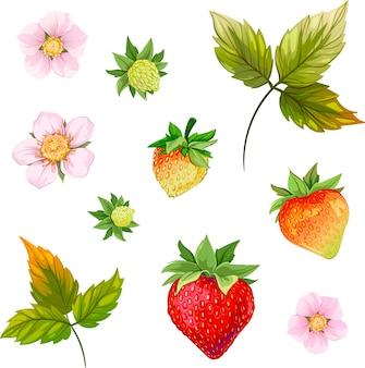 Fraises fleur blanche feuille de fraise croissance des fraises fleur de fraise