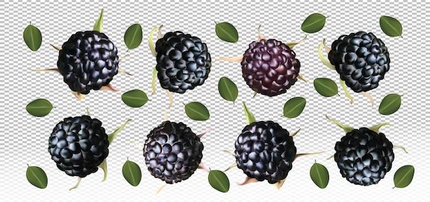 Framboise noire avec des feuilles sur l'espace transparent. les framboises noires fraîches sont entières. illustration vectorielle.