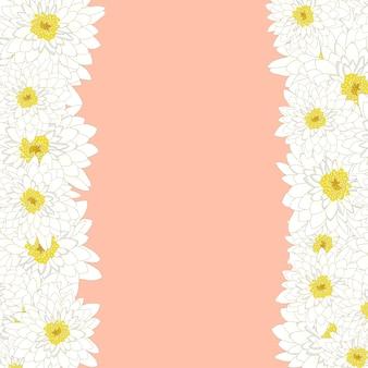Frontière blanche de chrysanthème
