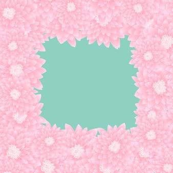 Frontière de chrysanthème rose