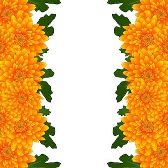 Frontière de fleurs de chrysanthème