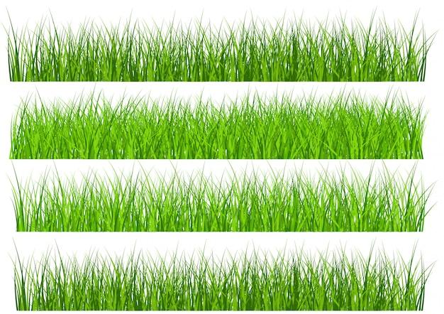 Frontière d'herbe verte définie isolé sur fond blanc