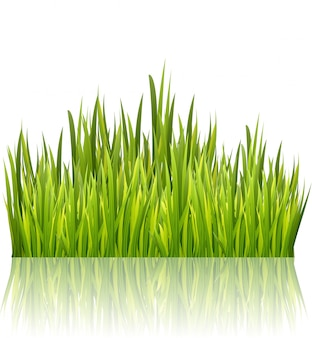 Frontière d'herbe verte isolée. élément de décoration d'herbe fraîche. illustration vectorielle