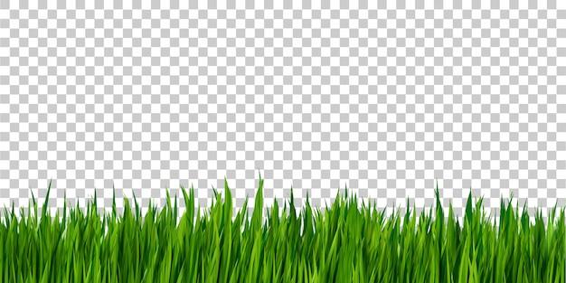 Frontière d'herbe verte isolée sur fond transparent, champ d'herbe
