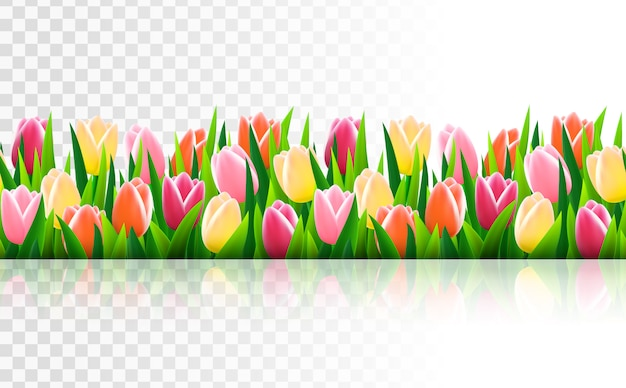 Frontière sans couture avec l'herbe et des fleurs