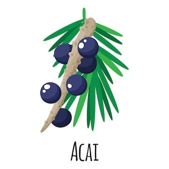 Fruit superaliment acai pour la conception, l'étiquette et l'emballage du marché fermier modèle. aliment biologique à base de protéines d'énergie naturelle.