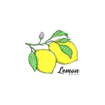 Fruits au citron