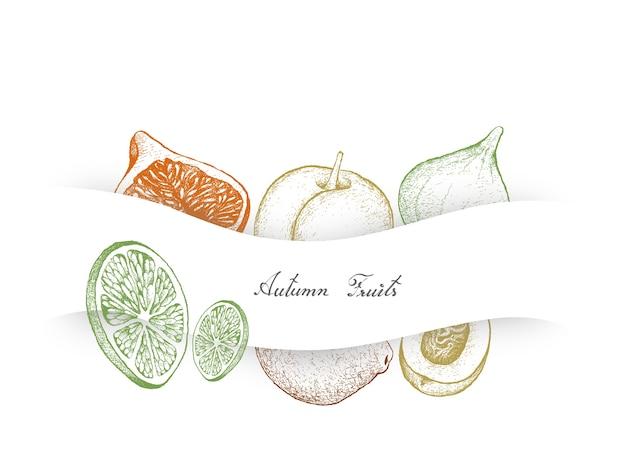 Fruits d'automne dessinés à la main, figues, citrons verts et pêches