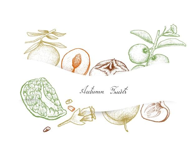 Fruits d'automne de grenade, kakis et prunes dessinés à la main