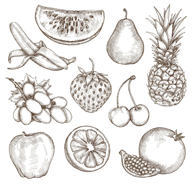 Fruits, croquis, dessin à la main, set vector