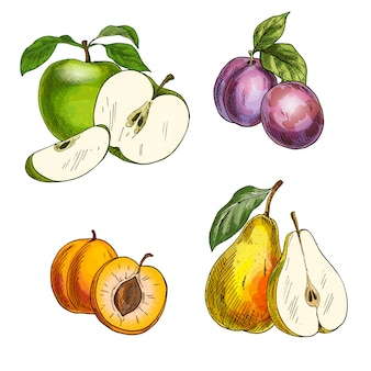 Fruits du jardin. pommes, poires, prunes, abricots.
