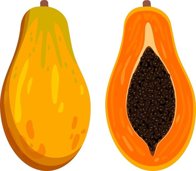 Fruits entiers de papaye et moitié icône de dessin animé d'illustration vectorielle isolé sur blanc