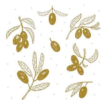 Fruits d'olive, branche illustration dessinée à la main