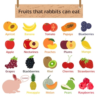 Fruits que les lapins peuvent manger. illustration vectorielle de nourriture