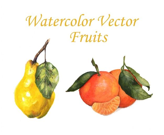 Fruits vecteur aquarelle