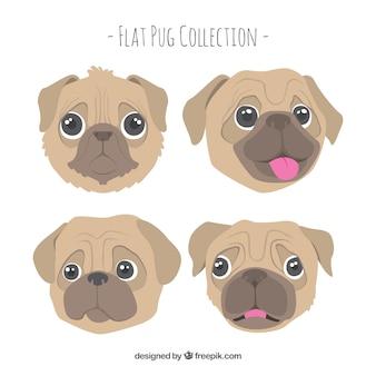 Funny pug faces avec un style adorable