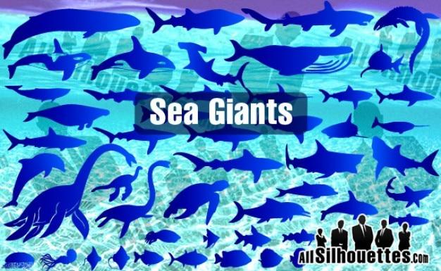 Géants des mers et des océans