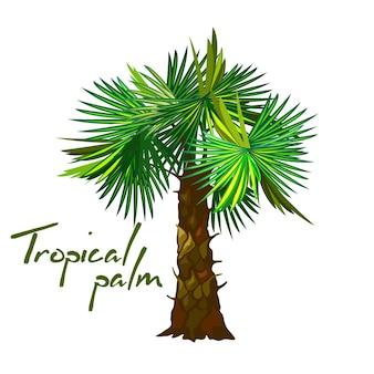 Genre de dessin animé de palmier
