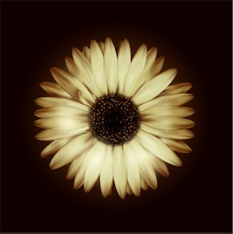 Gerbera réaliste beige fleur sur fond noir